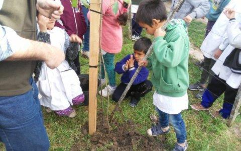 28 de junio: Revaloremos a nuestros árboles en el día mundial del árbol