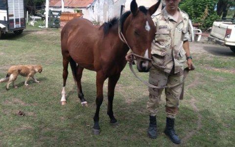 La Policía Rural recuperó en el Barrio Curita Gaucho de Gualeguaychú, un equino robado hace un mes