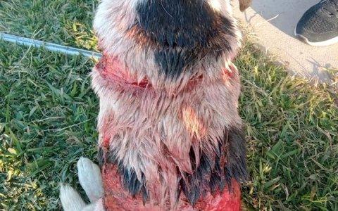 Atroz ataque a una perra en Larroque.