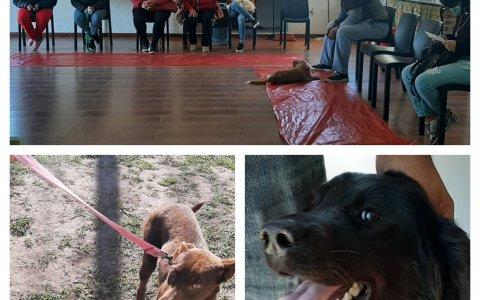 En Larroque la Municipalidad realizó una nueva campaña masiva de castración e identificación canina.